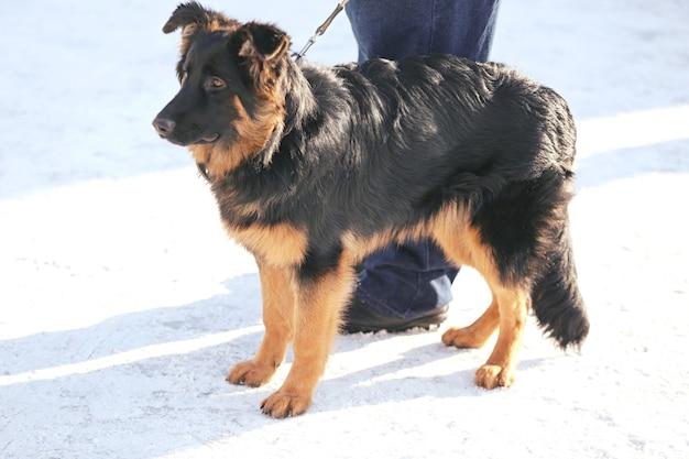 겨울 날 야외에서 주인이 있는 귀여운 재미있는 개