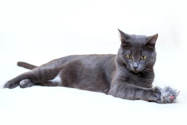 かわいい面白い灰色の猫は明るい背景にふわふわのおもちゃで横たわっています