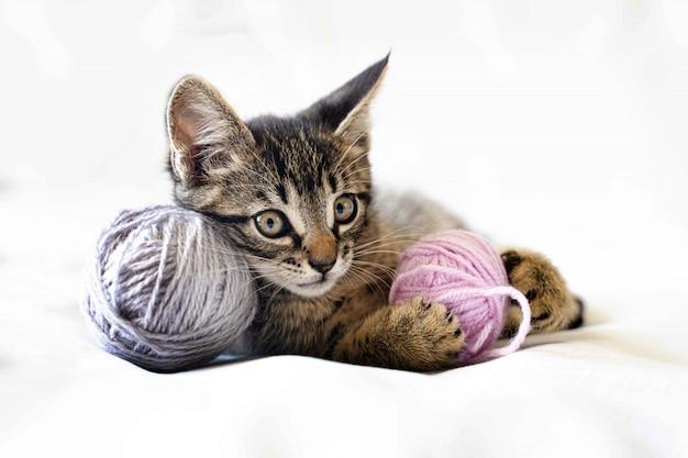 かわいい面白い子猫は白い背景の上に横たわって、糸のボールで遊んでいます。