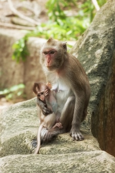 Cute funny monkey with cub face portrait view in natural forest of thailand extreme closeup