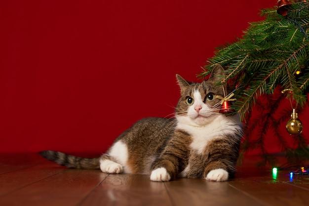 Милый забавный котик лежит под елкой на красном фоне, для новогодней открытки