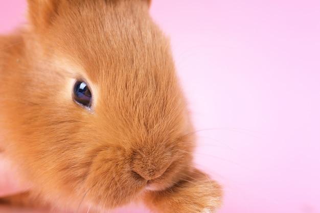 かわいい面白いウサギ、クローズアップ