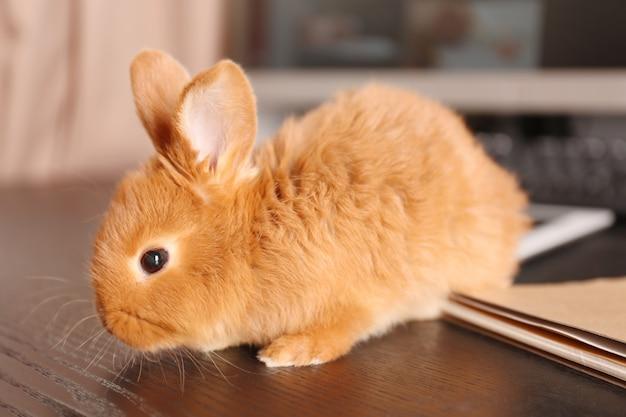 Милый забавный кролик на деревянном столе