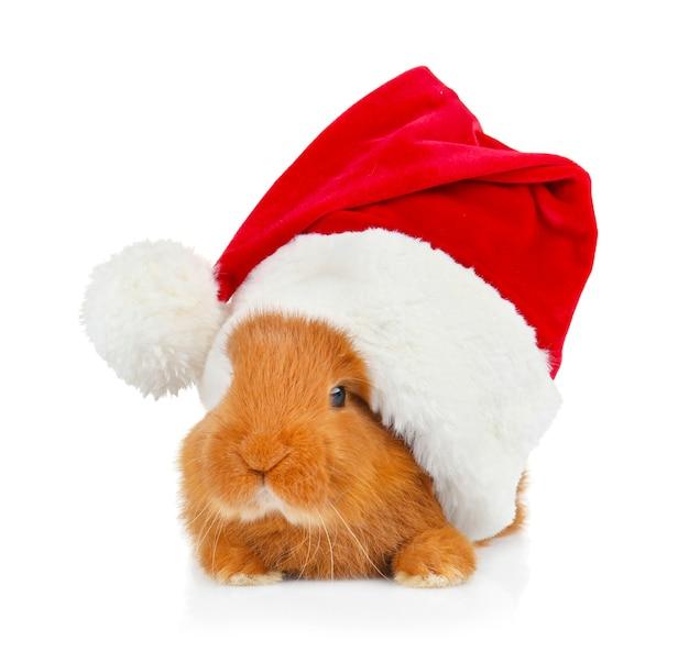 Милый забавный кролик в шляпе санта-клауса на белом фоне