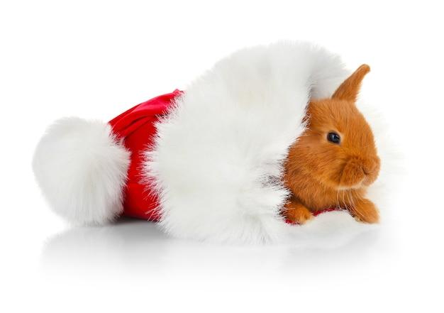 サンタクロースの帽子とかわいい面白いウサギ