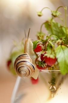 かわいい庭のカタツムリは、熟したベリーと野生のイチゴの小枝の束を這う