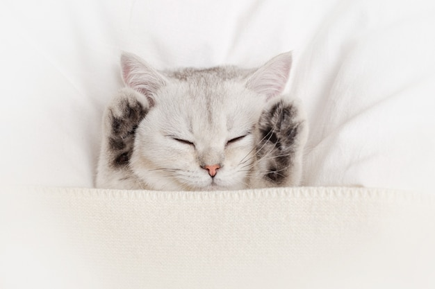 A cute, gentle white kitten sleeps paws up on a white bed with a knitted plaid.