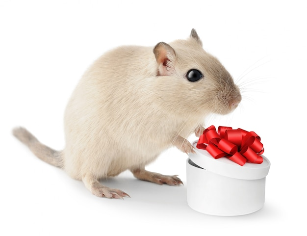 Cute gerbil pet mouse with a gift box in its paws