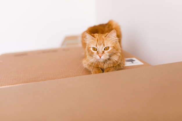 Cute ginger cat in cardboard box on floor at home
