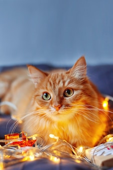 Cute ginger cat lying in bed with shining light bulbs and new year presents in craft paper.