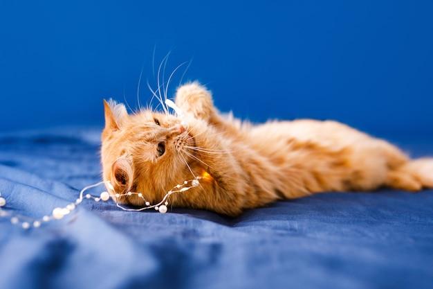 ベッドに横たわっているかわいい生姜猫。ふわふわのペットが快適に眠りに落ち着きました。面白いペットと居心地の良い家の背景。