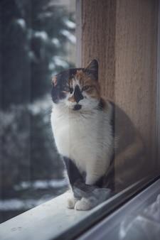 창틀에 siting와 뭔가를 기다리는 귀여운 생강 고양이. 창에 푹신한 애완 동물이 보인다.