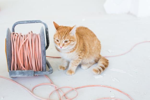 재 장식하는 동안 바닥에 앉아 귀여운 생강 고양이.