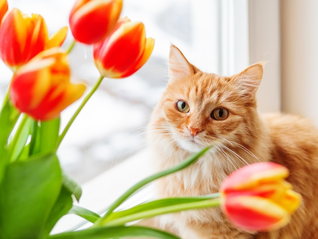 Cute ginger cat with bouquet of red tulips. fluffy pet with colorful flowers.
