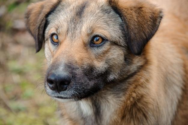 自然の中で外を見ているかわいい生姜ホームレス犬