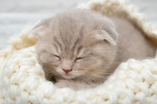 Cute ginger kitten is sleeping. close-up