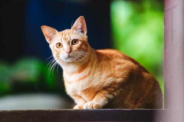 Симпатичный рыжий кот с янтарными глазами на размытом зеленом и черном фоне