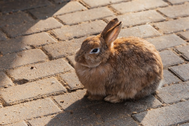 太陽の下で座っているかわいい生姜ウサギ