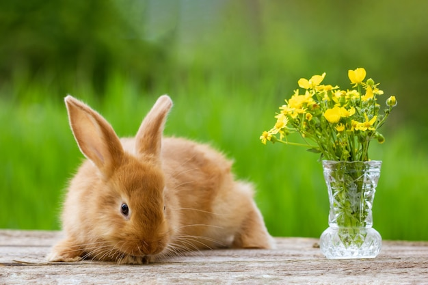 Cute ginger rabbit with a bouquet of yellow flowers on a green nature background