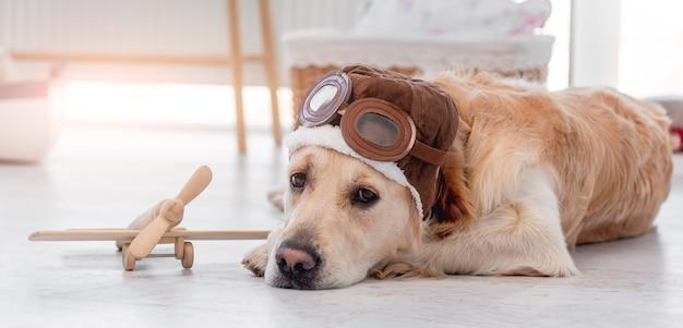 Милая собака золотистого ретривера в пилотской шляпе с очками лежит на полу дома