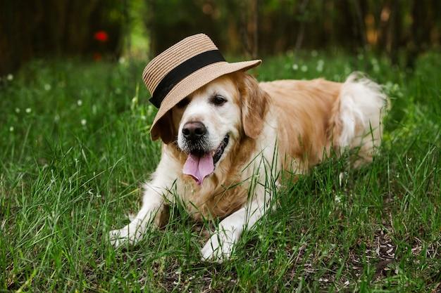 푸른 잔디에서 귀여운 골든 리트리버