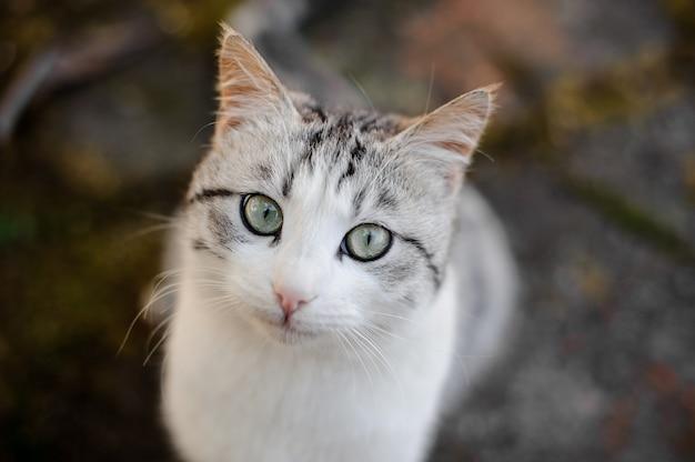 관심이 바닥에 앉아 카메라를보고 귀여운 회색과 흰색 고양이