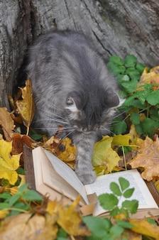 Милый серый кот читает книгу на осеннем фоне