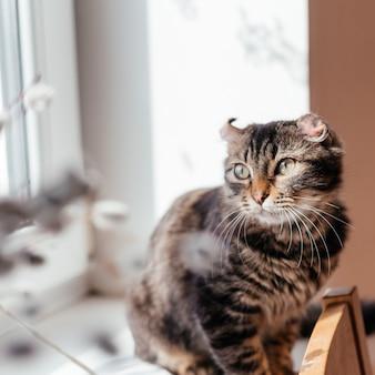 Милый серый кот сидит на подоконнике у веток вербы Premium Фотографии
