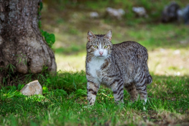 Cute gray cat with green eyes and pink nose, walking in the garden