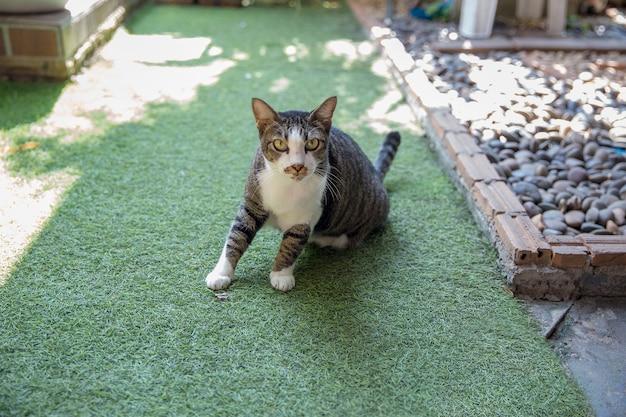 床で遊ぶかわいい灰色のネコや猫、選択的な焦点