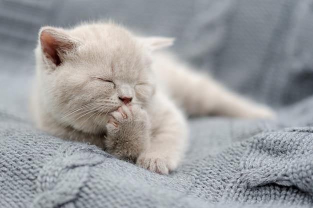 Cute gray funny baby kitten in gray cloth