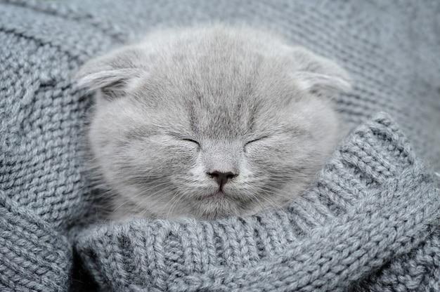 かわいい灰色の面白い子猫は灰色の布で眠る