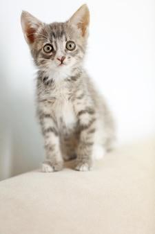 家でかわいい灰色の子猫