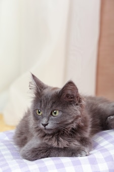 Милый серый котенок на подушке дома