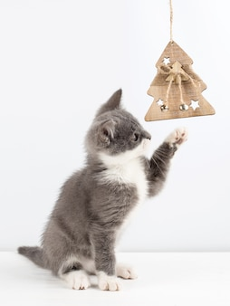 Cute gray kitten playing with a christmas toy.