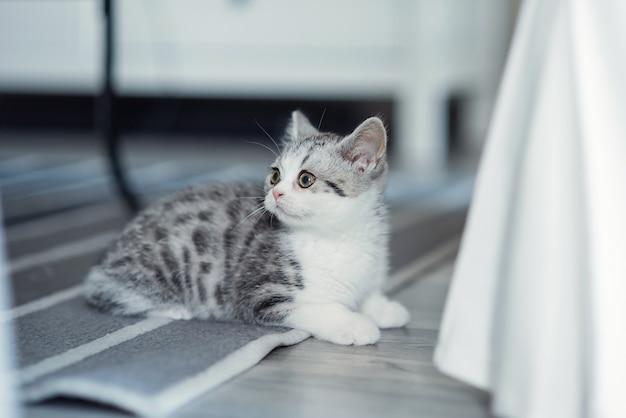 Милый серый котенок сидит на полу в помещении возле стула