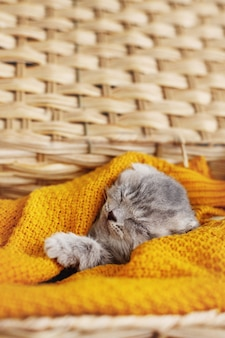 A cute gray kitten sleeps in a basket with a bright yellow blanket. pet, care, friendship