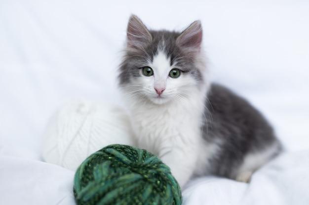 스레드의 공을 가지고 노는 카메라를보고 녹색 눈을 가진 귀여운 회색 고양이