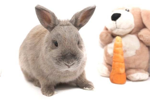 흰색 배경에 격리된 부드러운 장난감과 당근을 들고 앉아 있는 귀여운 회색 토끼