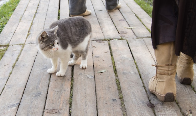 A cute gray stray cat looks at the feet of a passerby on the street. a cute kitty is sitting on wooden boards on the pavement, next to a man.