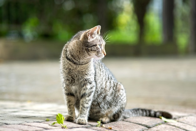 Cute gray striped cat sitting outdoors on summer street.
