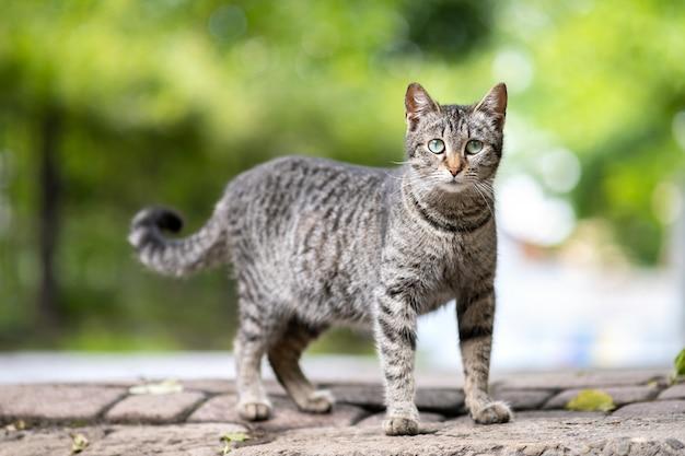 Милый серый полосатый кот, стоя на улице на улице летом.