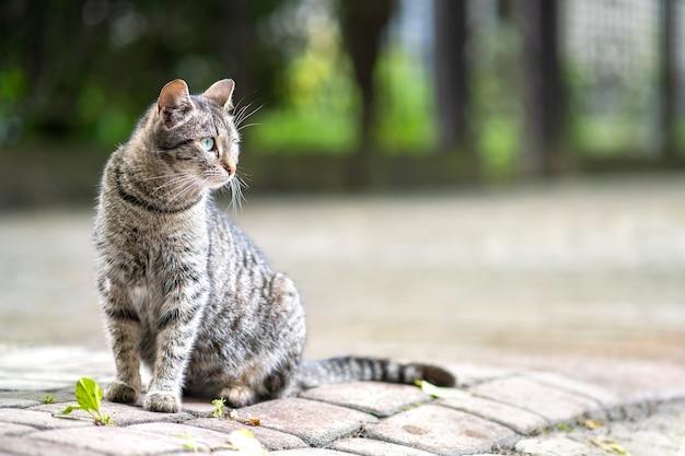 夏の通りに屋外に立っているかわいい灰色の縞模様の猫。