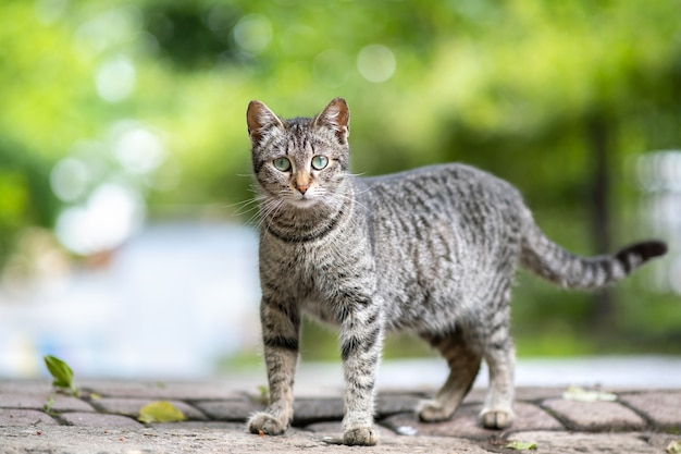 Милый серый полосатый кот, стоя на открытом воздухе на летней улице.