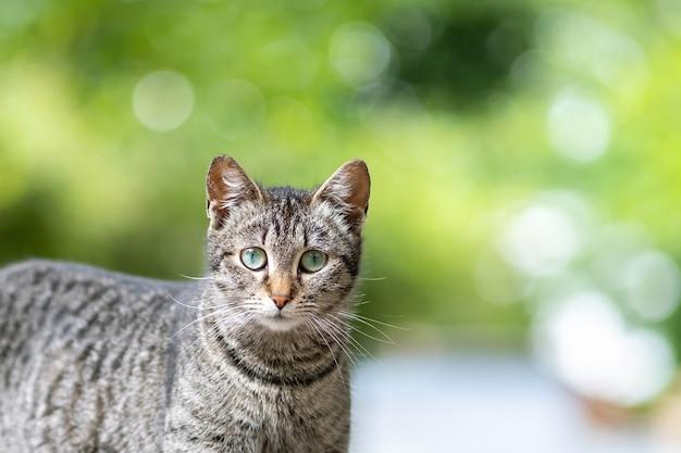 Милый серый полосатый кот, стоя на открытом воздухе