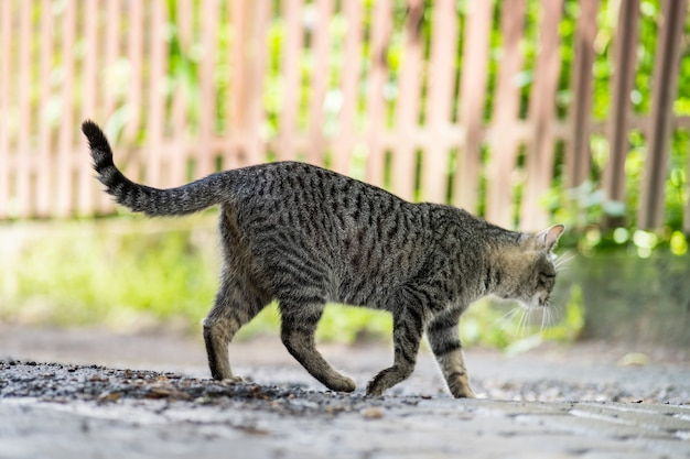 Cute gray striped cat walking down the street outdoors in summer.