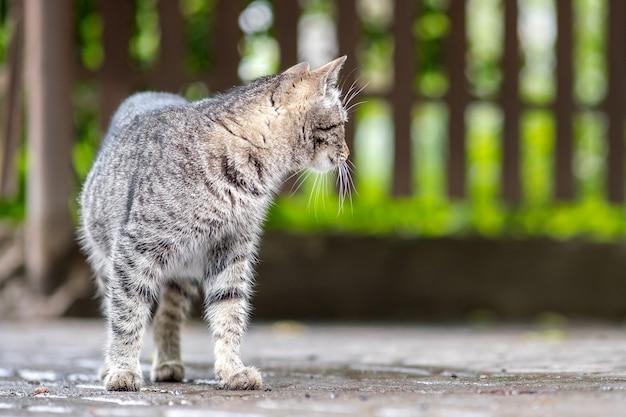 Симпатичный серый полосатый кот идет по улице на открытом воздухе летом.