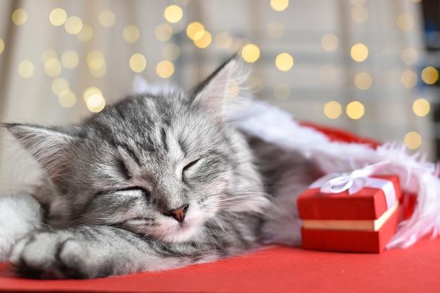귀여운 회색 줄무늬 고양이가 자고 있습니다. 축제 분위기. 새해 복 많이 받으시고 즐거운 성탄절 보내세요.