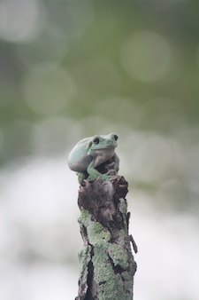A cute green toad over a tree trunk with a bokeh background