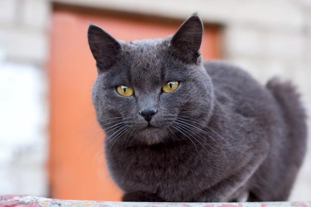 Cute grey cat sitting outside in summer